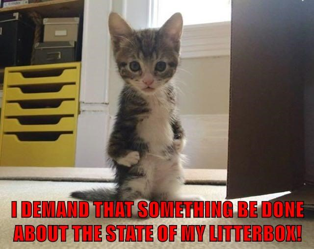 I DEMAND THAT SOMETHING BE DONE ABOUT THE STATE OF MY LITTERBOX!
