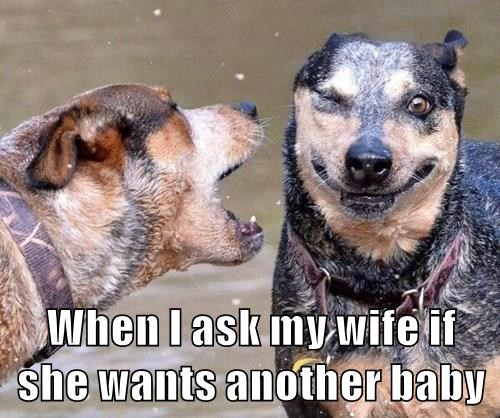 animals dogs yelling pregnant caption funny - 8594197760