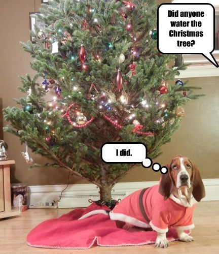 dogs christmas tree pee caption funny - 8594275072