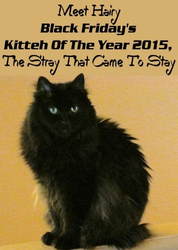 Black Friday's Kitteh Of The Year 2015
