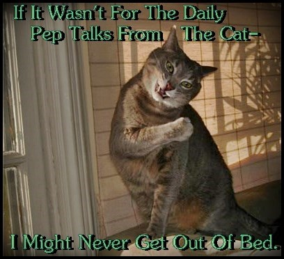 My Cats Are The Reason I Get Up Every Morning-