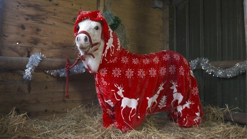 cute christmas animal Festive and Cozy 'Foursie' for pony