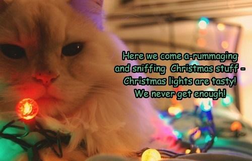 singing,Christmas Carols,caption,Cats,funny