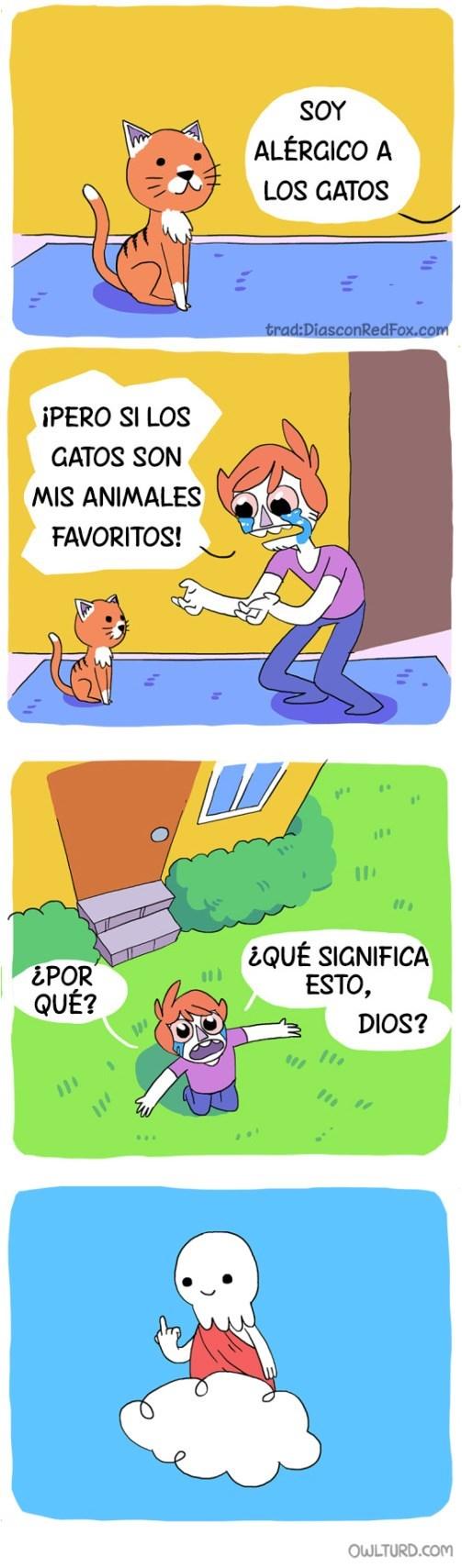 alergico a los gatos
