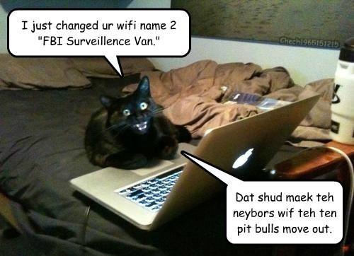 caption Cats funny - 8595113472