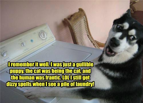 dogs washing machine prank caption Cats funny - 8595202304