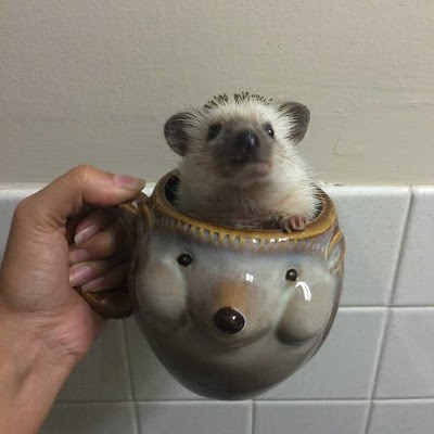 cute photo of hedgehog in hedgehog mug