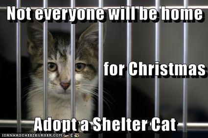animals sad but true forever home caption Cats - 8595653888