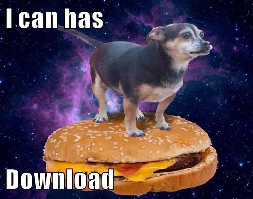 animals - 8595674368