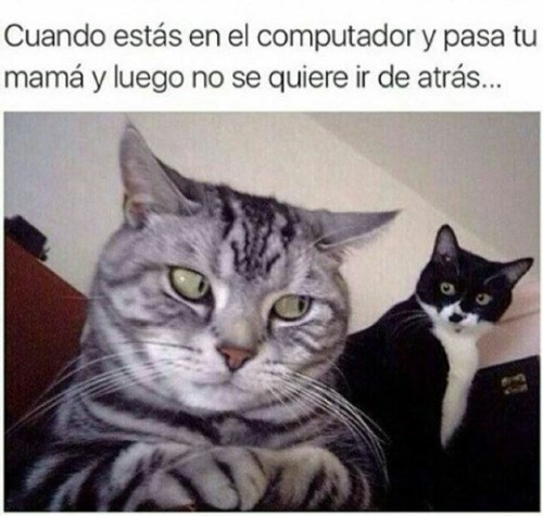 tu mama pasa