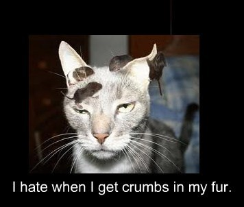 caption Cats funny crumbs - 8595756032