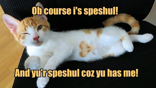 caption Cats funny special - 8595791872