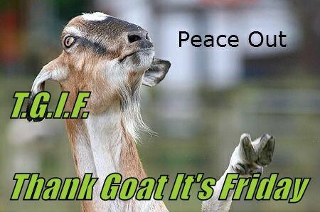 T.G.I.F.  Thank Goat It's Friday