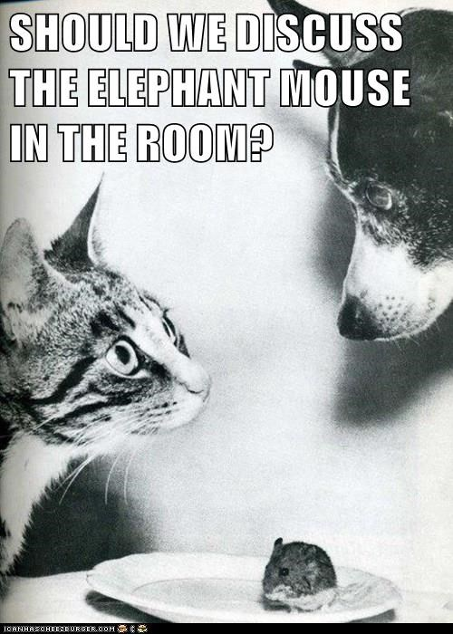 cat,dogs,secret,caption,funny,mouse