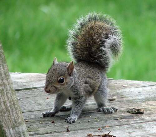 baby,squirrel