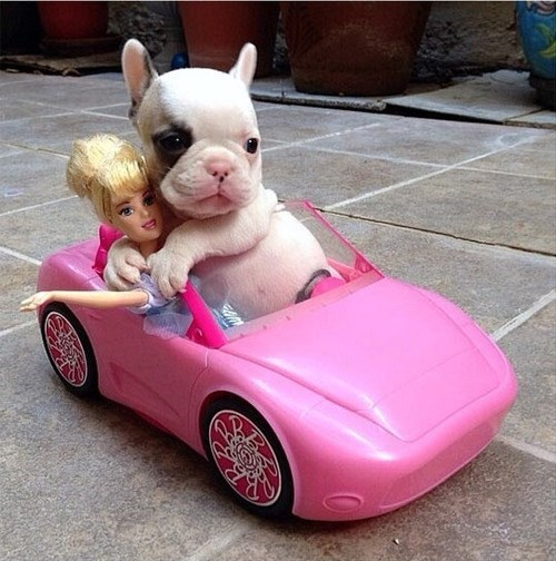Barbie,puppy,car