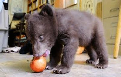 baby bear - 8596093440