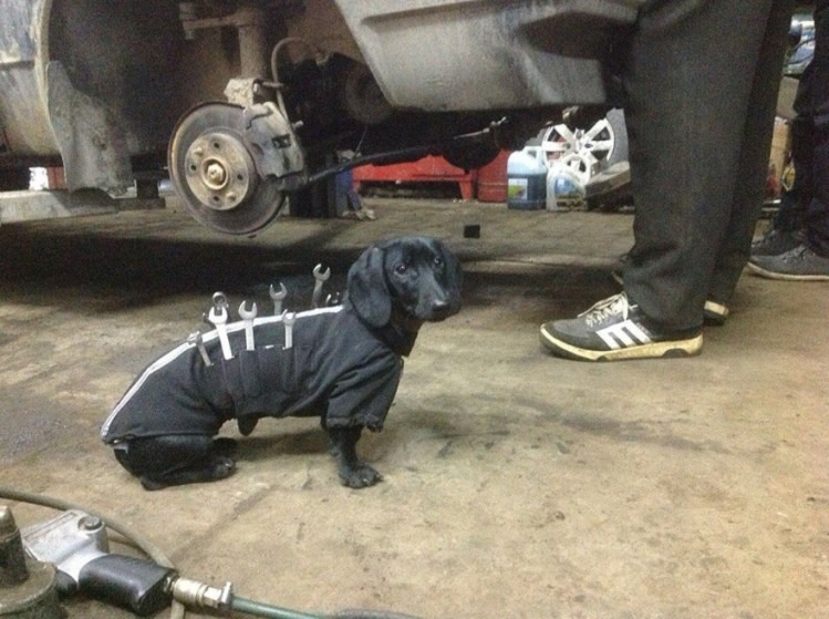 photo of cute daschund dog helping owner with car work