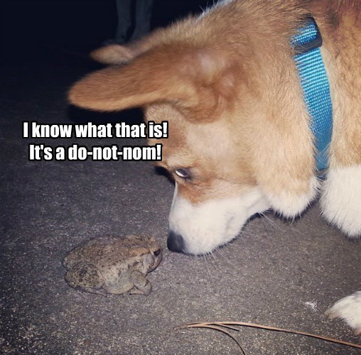 caption,dogs,frog,do not want,funny,toad