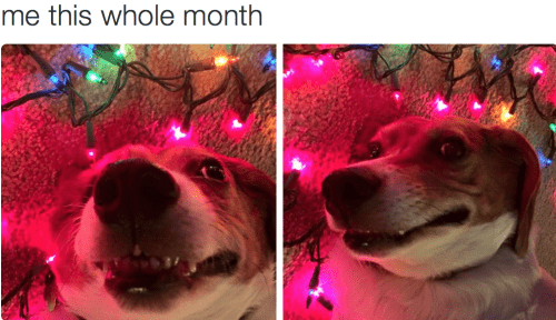photo of goofy dog next to christmas lights