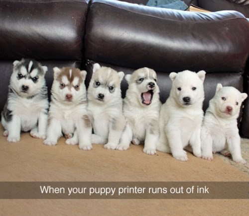 tumblr post of puppies that says when your puppy printer runs out of ink