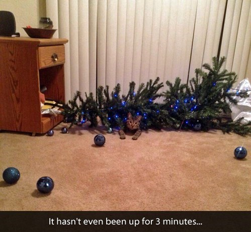 tumblr post of cat who knocked down christmas tree