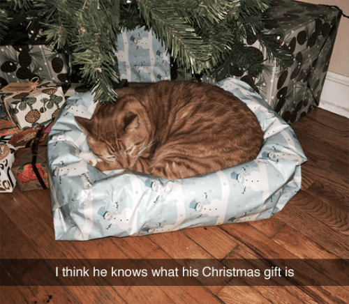 tumblr post of cat who found out what his christmas present is