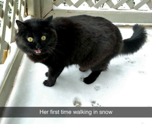 tumblr of cat in snow for first time