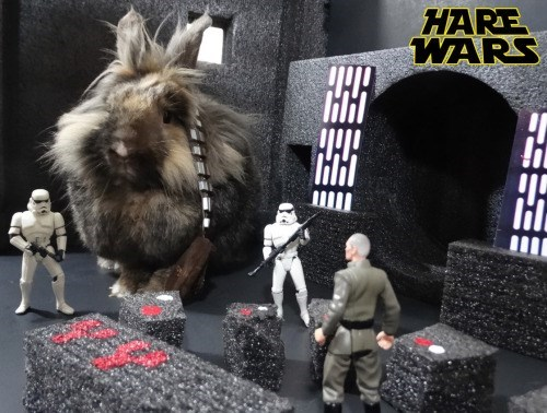 staged photo of rabbit roger the grump dressed up in star wars