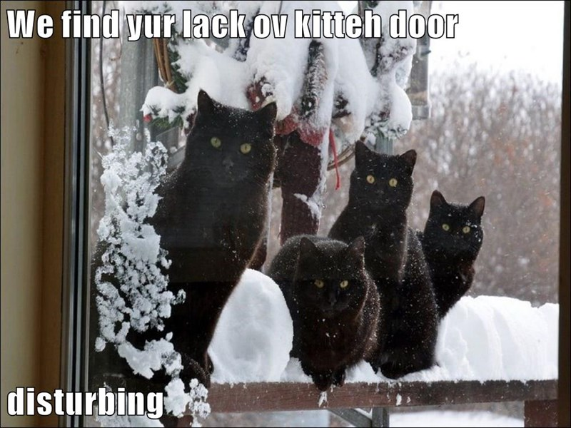We find yur lack ov kitteh door  disturbing
