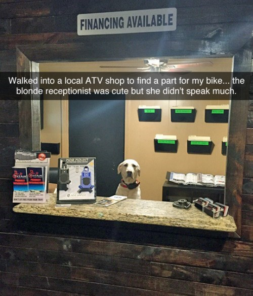 tumblr of cute dog behind counter at office