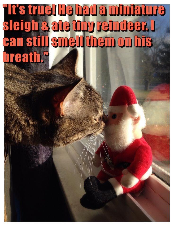 animals sniff breath santa caption Cats funny - 8597382656