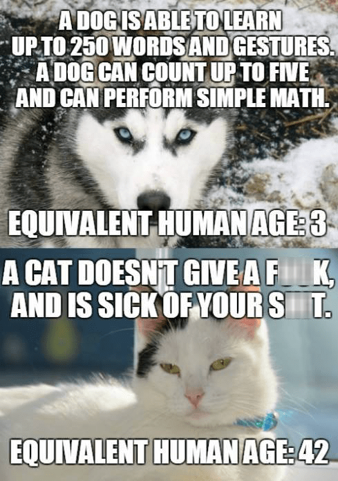 funny memes cat vs dog equivalent human age
