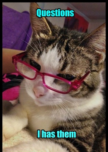 question caption Cats funny - 8597501440
