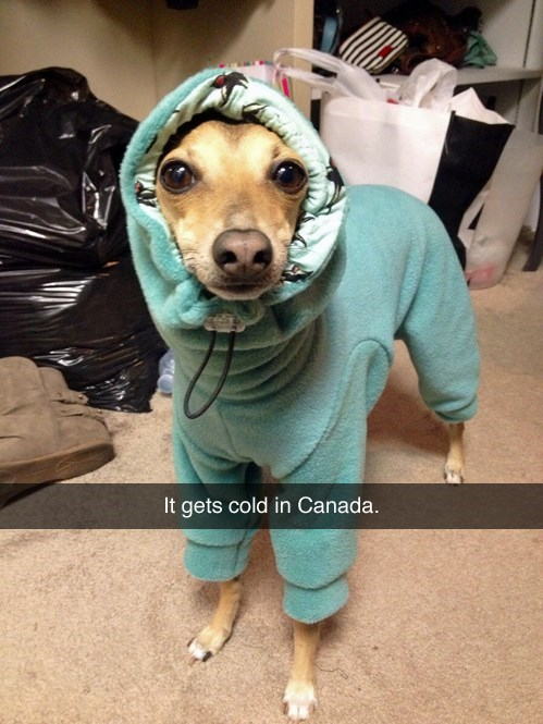 photo of a small dog in a snuggie for the cold