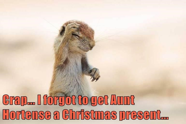 christmas,present,ive-made-a-huge-mistake,squirrel,funny