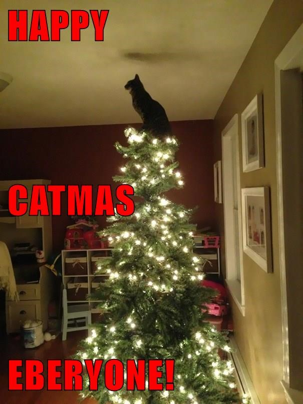 HAPPY CATMAS EBERYONE!