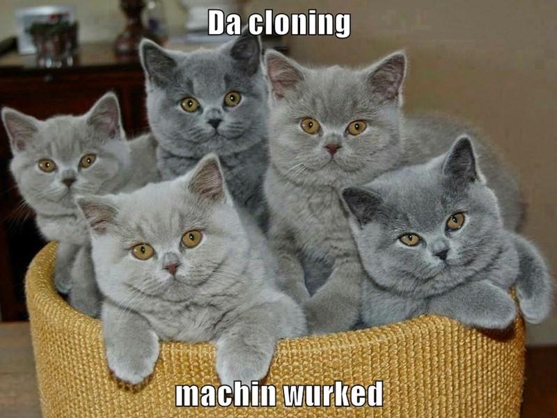 animals clone kitten caption Cats funny - 8597784576