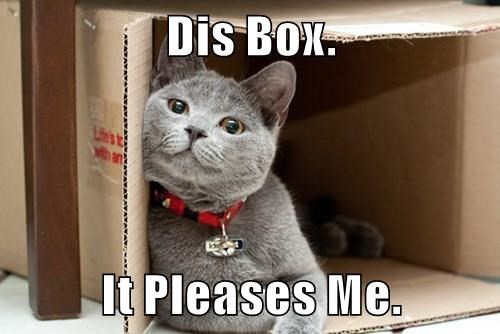 animals box happy caption Cats funny - 8597786624