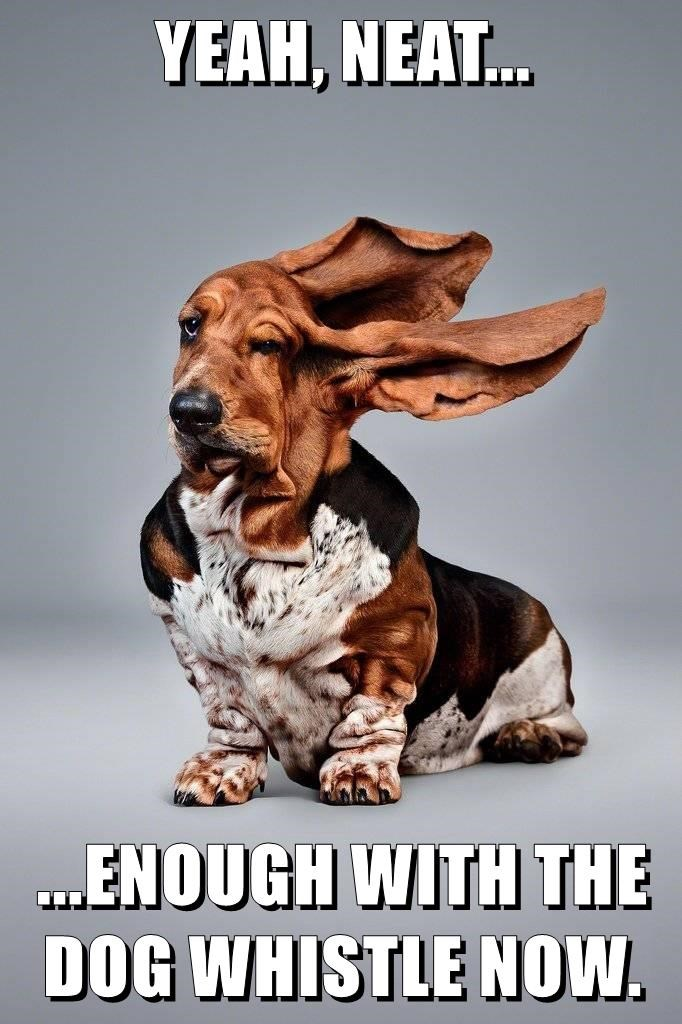 animals whistle dogs ears caption funny - 8597850112