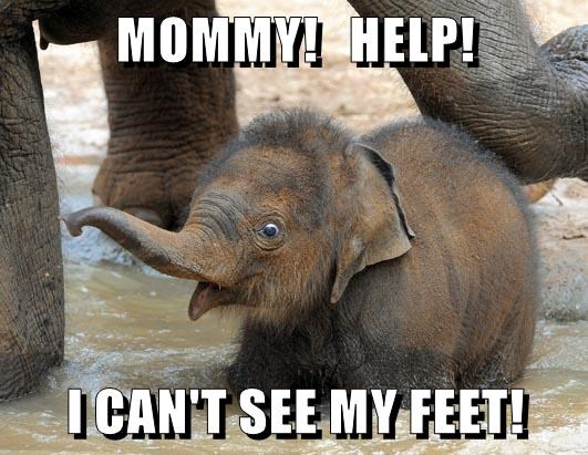 animals baby elephant feet cute funny - 8597869568