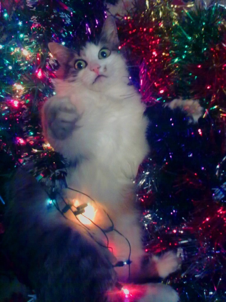 photo of cat in christmas tinsel