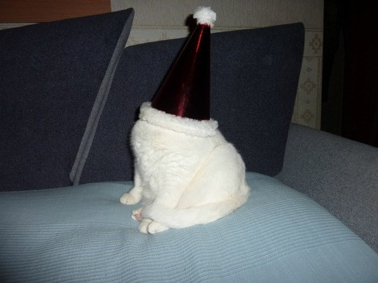 cat wearing santa hat that is too big and fits over whole head