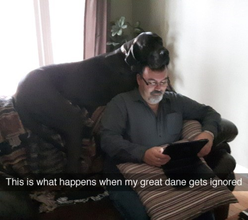 tumblr post of great dane resting head on owner