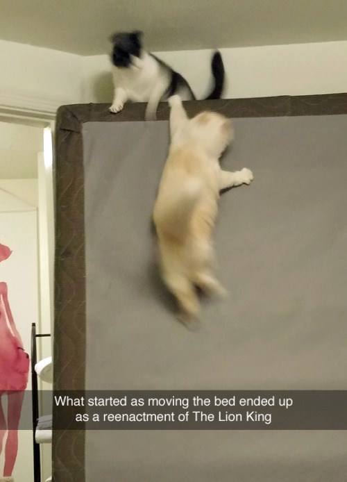 photo of cats playing on mattress