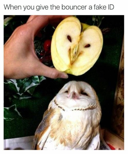 photo of an owl that looks like an apple