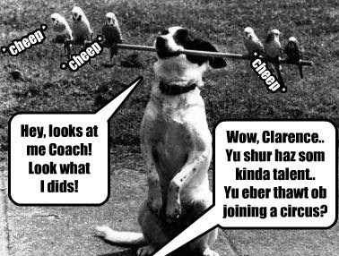 dogs,birds,caption,funny