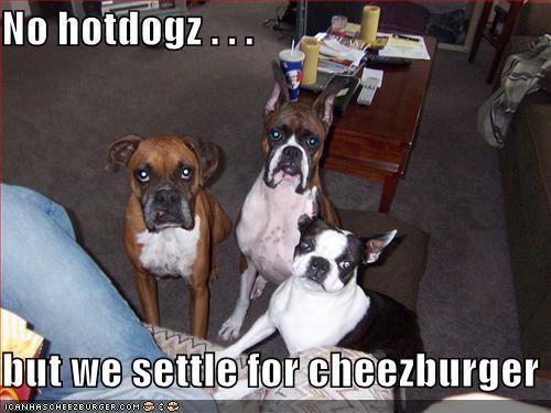 Cheezburger Image 859825920