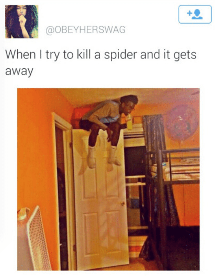 spiders - 8598412288