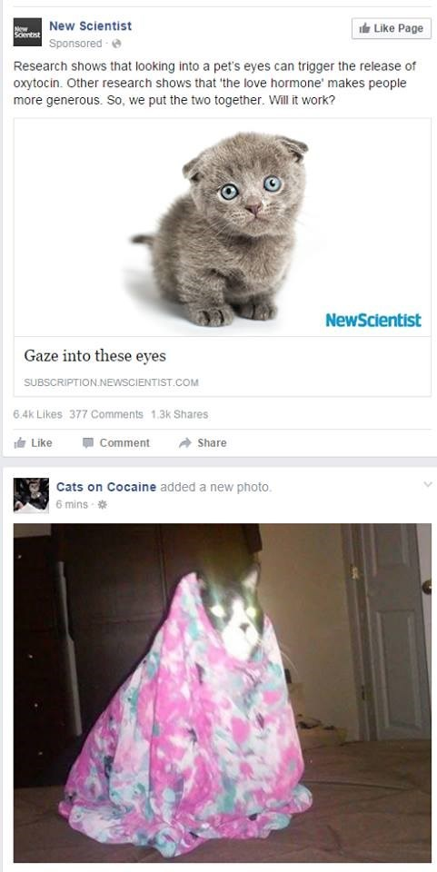 juxtapositions facebook reality research Cats animals